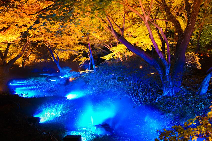 Oświetlenie LED RGB ogrodu